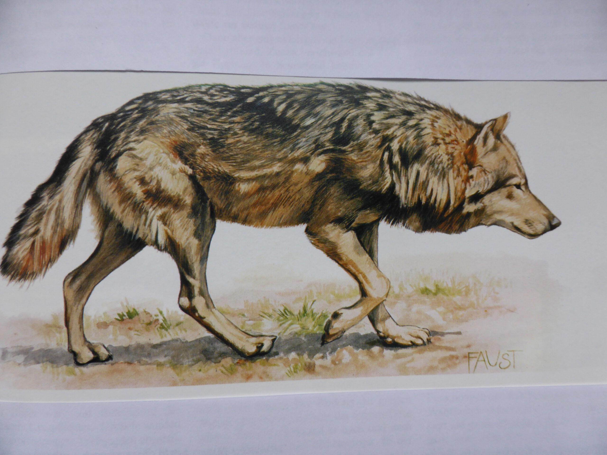 Wolfsgebiet Südschwarzwald?